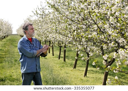 Agronomist or farmer examine blooming cherry trees in orchard, and writing data