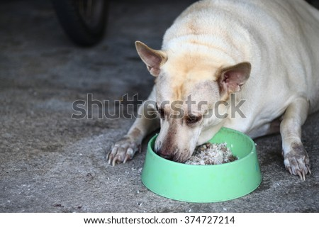 aHungry dieting Labrador puppy dog and empty food dish isolated on white with copy space - stock photo