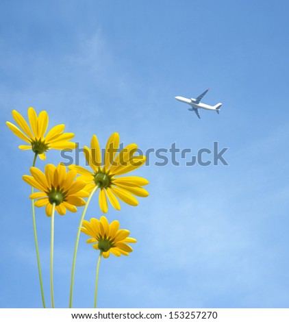 Aircraft and camomile  - stock photo
