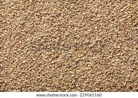 Ajwain Seed - stock photo