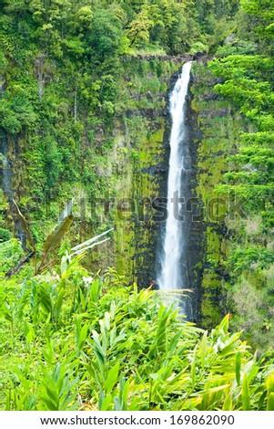 Akaka Falls on the Big Island of Hawaii in a tropical rain forest - stock photo
