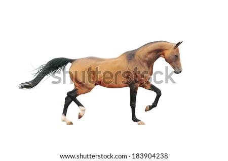 akhal-teke horse isolated on white - stock photo