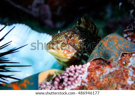 Greenling Stock Photos, Royalty-Free Images & Vectors ...