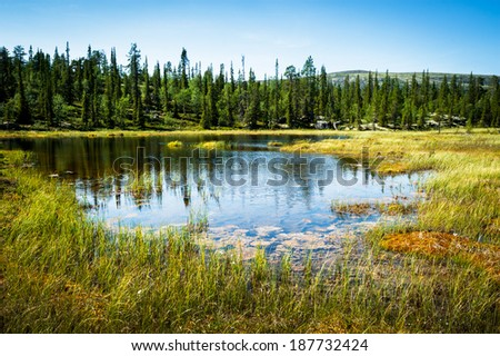 Alaska wildlife landscape with endless forests and waters - stock photo