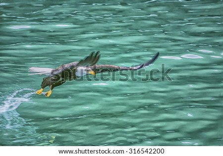 Alaskan bald eagle swooping for fish,digital oil painting - stock photo