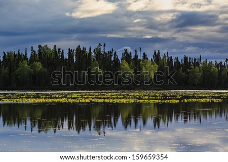 Alaskan lake with reflection of trees lining the shoreline interspersed with lily pads in summertime - stock photo