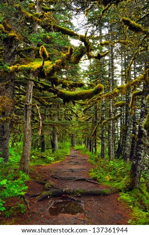 Alaskan Rain Forest - stock photo