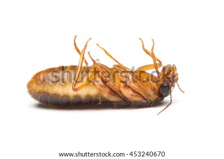 Alates dead on white background,termite
