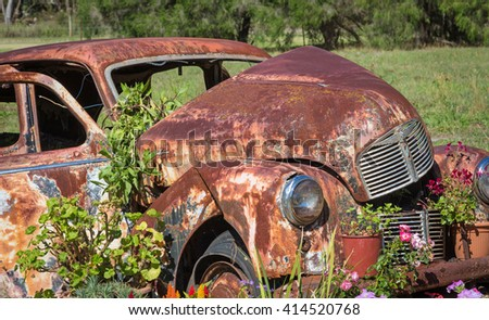 ALBANY, AUSTRALIA - MARCH 30, 2016: A rusty Austin A40 motor car in its final resting place among flowers just outside the town of Albany, in Western Australia. - stock photo