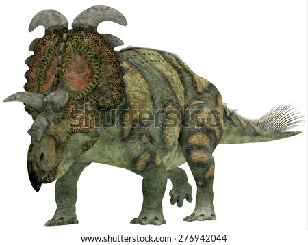 Albertaceratops over White - Albertaceratops was a herbivorous dinosaur that lived in Upper North America in the Cretaceous Period. - stock photo