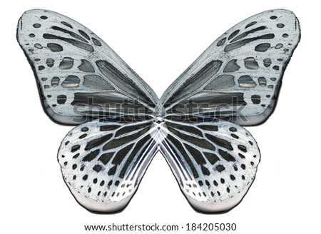 Albino butterfly wings isolated - stock photo