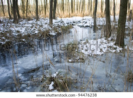 Alder forest and beaver dam