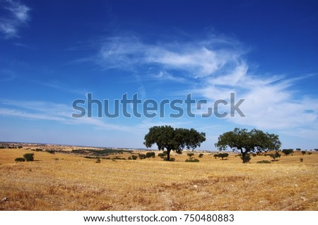 Alentejo landscape, south of Portugal
