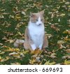 Alert Cat on a Fall Day - stock photo