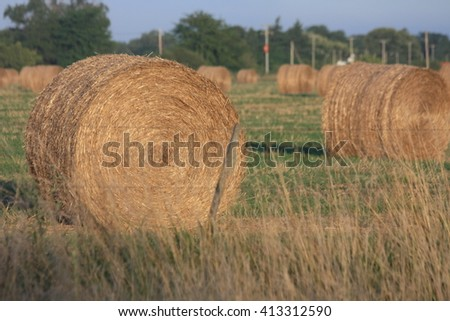 Alfalfa bales - stock photo