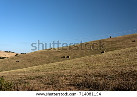 Alfalfa bales on a field