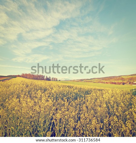 Alfalfa Field and Small Town on the Background of Snow-capped Alps in Switzerland, Instagram Effect - stock photo