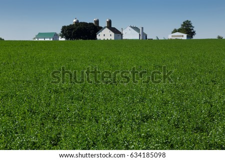 Alfalfa Field with farm in background.