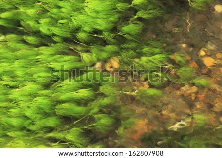 Alga - stock photo