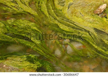 Algae - stock photo