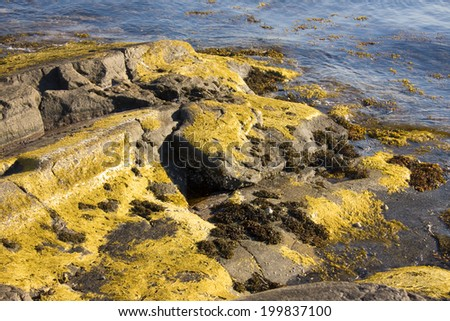Algae and seaweed on a fjord in Norway - stock photo