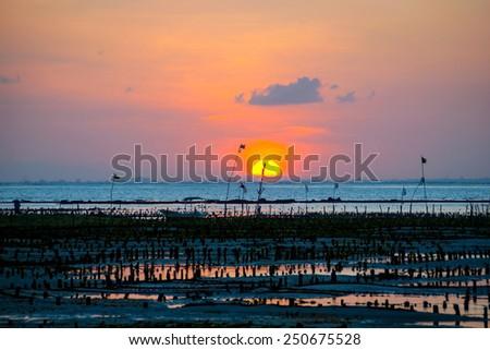 Algae farm field in sunet, in Nusa Lembongan, Indonesia - stock photo
