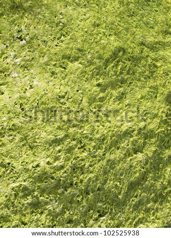 Algae green background. An abstract background - stock photo