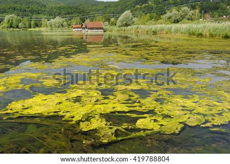 algal bloom in lake in Bavaria - stock photo