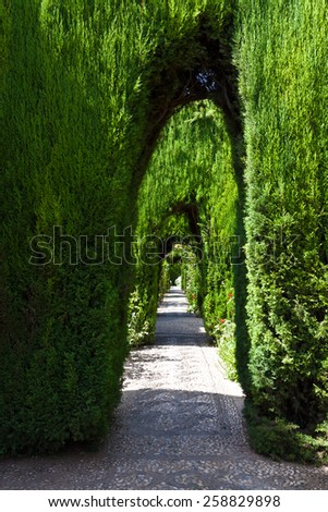 Alhambra de Granada. Hedge's tunnel in the Lower gardens of the Generalife