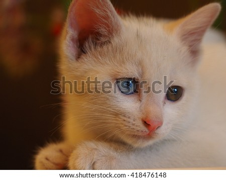 All kinds of status of a little cute naughty white cat