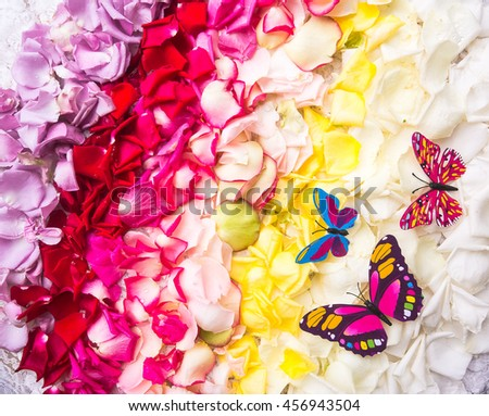 All of rose ,stem ,rose flowers's petals on white background of white rose-pattern fabric. For beautiful background / wedding event or special. - stock photo