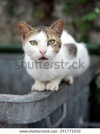 Alley Cat sat on a rubbish bin with a surprised look on its face - stock photo