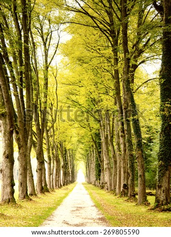 alley in a wonderful park  - stock photo