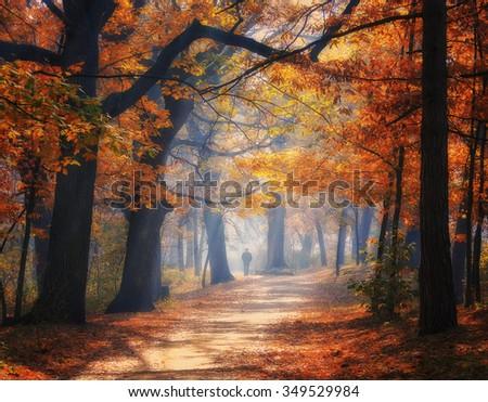 Alley in autumn park - stock photo