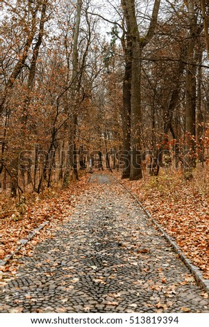 Alley in autumn park is not bright cloudy day. Autumn background park lane with pavement, meadow, plant landscape design as a support for wildcard design. Autumn park landscape