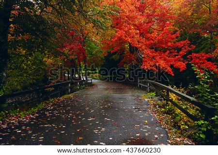 Alley in autumn park via a bridge with wooden railings. beautiful trees with bright red leaves. United States Maine  - stock photo