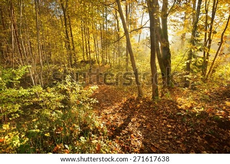 Alley in the park during the golden Autumn. Sigulda, Latvia - stock photo