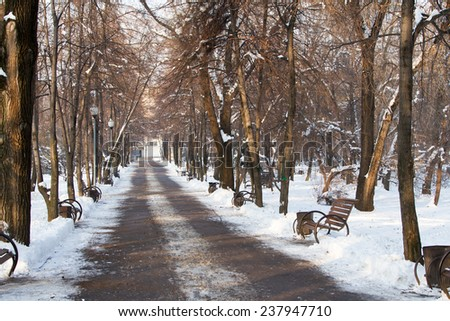 Alley in the park in the winter in the city center - stock photo