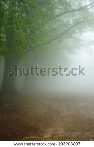 Alley in the very dense fog
