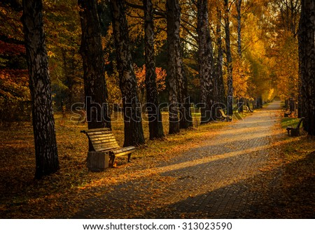 alley of birches in the autumn evening - stock photo