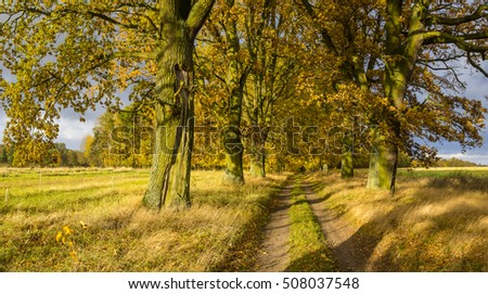 alley of old oak trees in autumn