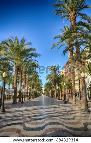 Alley of palm trees Alicante, Spain