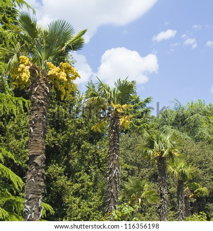 Alley of palms with yellow flowers and vegetation around, blue sky.