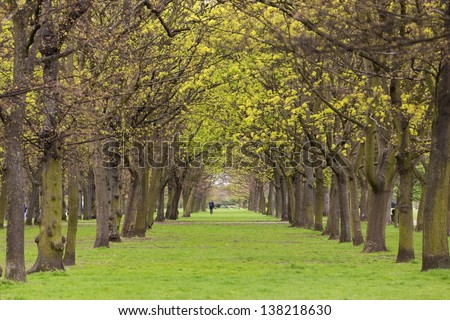 Alley of trees and lawn in Regent's park at spring, London - stock photo