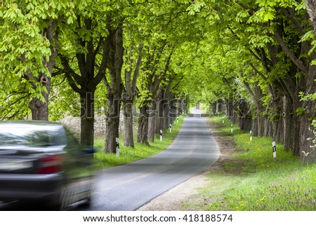 alley of trees in germany
