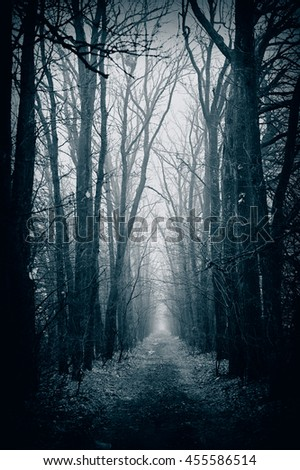 Alley of trees in the fog