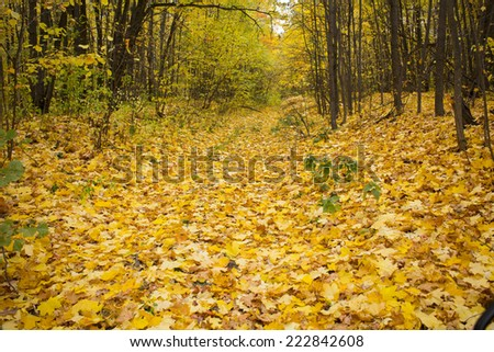 alley strewn with yellow autumn leaves lining the trees in the forest - stock photo