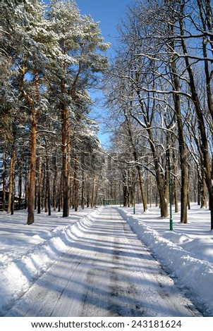 Alley winter forest. Trees and pines - stock photo