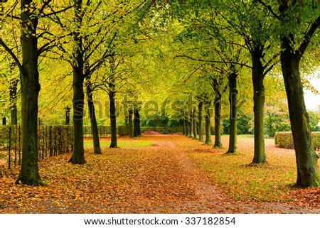 Alley with several trees and brown leaves - stock photo