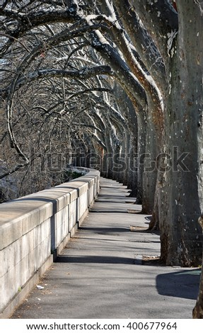 Alley with trees among Tevere river, Rome